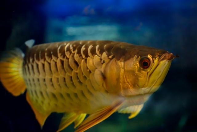 熱帯魚ビジネスは儲かる!熱帯魚ショップで稼ぐ・成功する経営方法を大公開